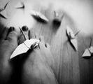 ..за птиците и хората.. ; comments:18