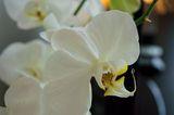Орхидея ; comments:7