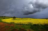 И облакът свъсен строго погледна полето с рапица ; comments:31