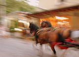 Препускащи коне ; comments:8