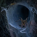 The Spider Hole ; comments:65