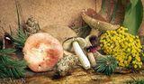 Champignons mortes ; comments:5