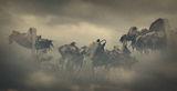 Нощем с белите коне ; comments:47