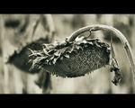 Есенно... ; comments:39