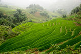 Rice paddies, Sa Pa hills ; comments:37