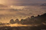 Тосканска утрин ; comments:45