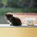 Неделя, котка и кафе... ; comments:16