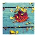 ...цветен листопад... ; comments:8