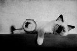 И за тези, на които им е писнало от котки :)))) ; comments:19