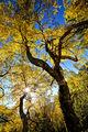 Усещане за есен ; Comments:13