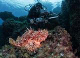 Риба Сkорпион ; comments:12