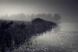 Сутрин в мъглата ; comments:37