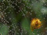Капки есенна роса!!! ; comments:67