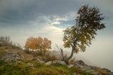 Мъгливо ; comments:49