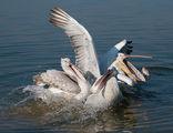 езеро Керкини ; comments:22