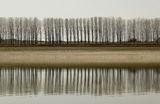 Край реката редят се тополите... ; comments:28
