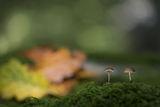 Есен в друг свят ; comments:28