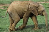 Слончето Нели :) ; Comments:6
