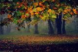 Autumn ; comments:53