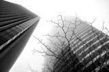 Загубени в мъглата - Фрактали ; comments:28