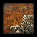 Есенни ята... ; comments:14