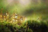 В света на малките и почти невидими неща ; comments:22