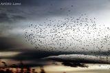 След хаоса идва спокойствието, че всичко е на място, макар и хаотично... ; comments:12
