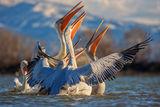 Ансамбалът по синхронно плуване пожелава на фотофорум весели празници и щастлива нова година! ; comments:51