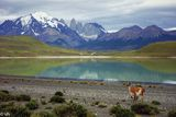 Chile Patagonia ; comments:31