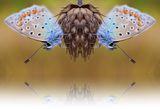 Пеперудено... ; comments:60