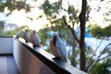 един яде, други гледат ... ; Comments:3