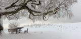 Снежен покой ; comments:35