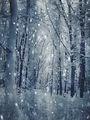 Пак зима... ; comments:46