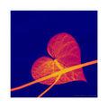 Сърдечно-съдова система :) ; comments:21