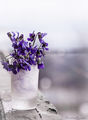 Пролетно събуждане... с аромат на теменужки... ; comments:22