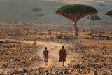 Под палещото слънце на Сокотра. ; comments:112