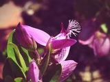 Нежност в розово... ; comments:33