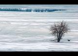 Зимна приказка ; comments:64