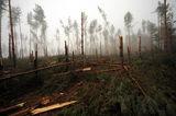 Бъдещето на нашата гора ; comments:6