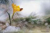 Пролет ; comments:33