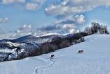 Снежна Разходка ; Comments:12