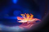 Пролетни сънища ; comments:11