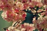 Пролет... ; Comments:29
