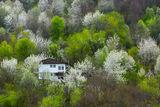 Дъх на бяла пролет ; comments:59