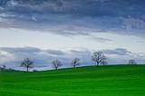 малко небе, малко трева ... обичам да съм там ; Comments:18