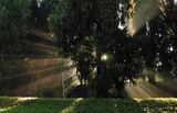 Светлината в гората ; comments:49