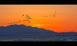 Полетът на фламингото ; comments:38