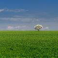 ... моя бяла пролет ; comments:48