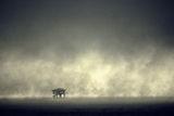 Доспатска мъгла ; comments:34