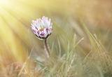 Пролетни цветя ; comments:15